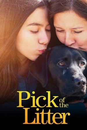 Poster: Hundeleben – Vom Welpen zum Blindenhund