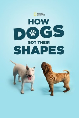 Poster: How Dogs Got Their Shapes
