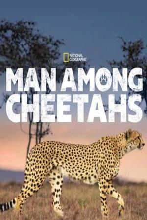 Poster: Unter Geparden