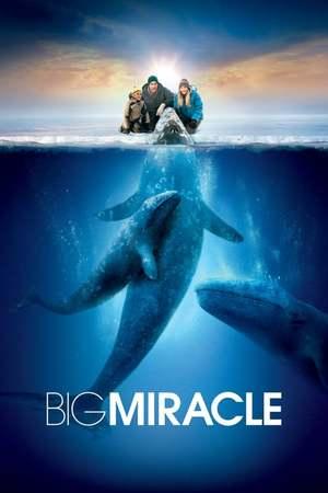 Poster: Der Ruf der Wale