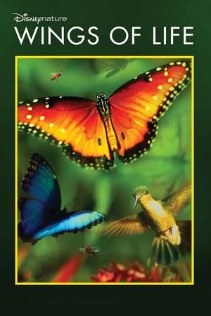 Poster: Blüten - Boten des Lebens