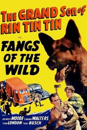 Poster: Rin Tin Tin