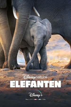Poster: Elefanten