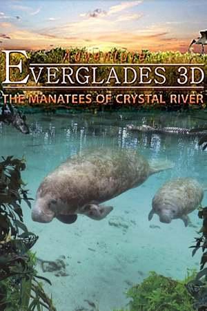 Poster: Abenteuer Everglades - Die Manatis des Crystal River