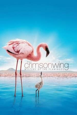 Poster: Das Geheimnis der Flamingos